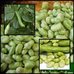 Las habas frescas o secas, es de fácil digestión. Si se va a comer de manera seca, se deberá remojar previamente por un tiempo aproximado de 12 horas