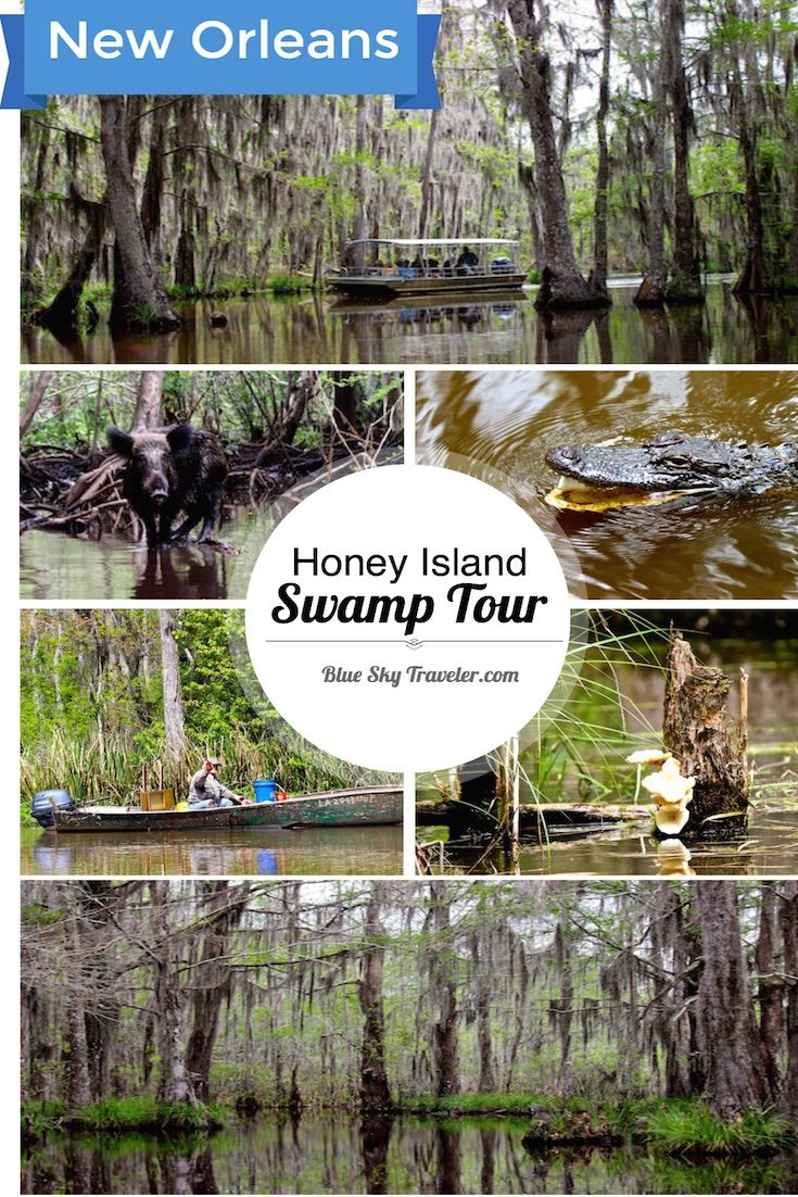 Exploring the Bayou on a Swamp Tour outside of New Orleans. Alligators, Snakes, Mossy bayous. It was all fun and games in the Bayou until the Wild Boar with big tusks tried to climb in the swamp boat.