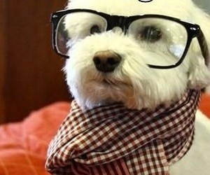 Smarty Pup