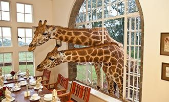 2. Giraffe Manor, Kenya. Holidays with Kids Top 10 Family Resorts International