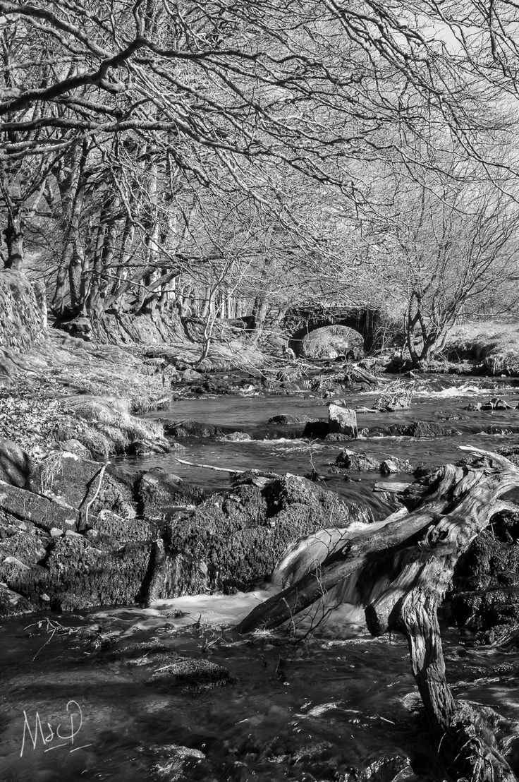 The flowing Weir river on Exmoor in the summer.  For more images from Exmoor by Mark www.exmoor.photography