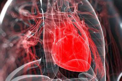 الدكتور جمال الصقلي: أنبوب من الخلايا الجذعية يضخ وينبض كـ...القلب