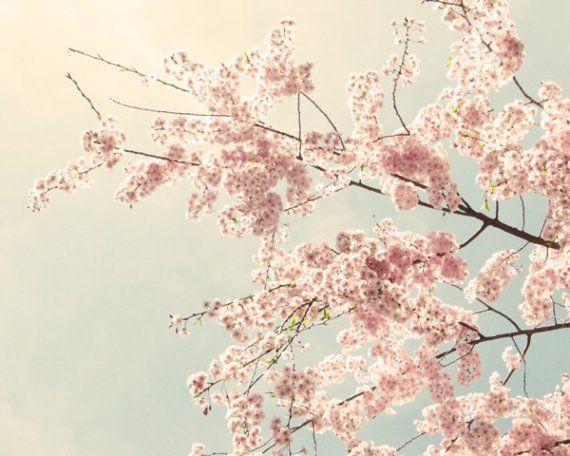 Cherry Blossom Art Cherry Blossom Photo nature