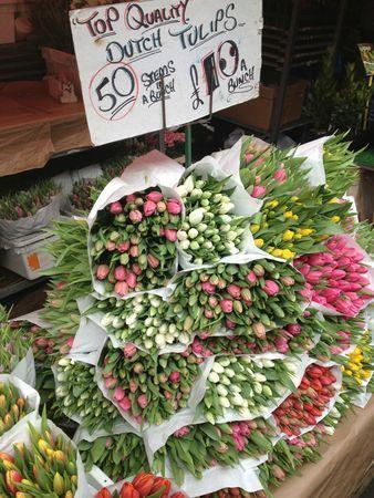 78+ images à propos de tulips sur pinterest   beautiful, vase et