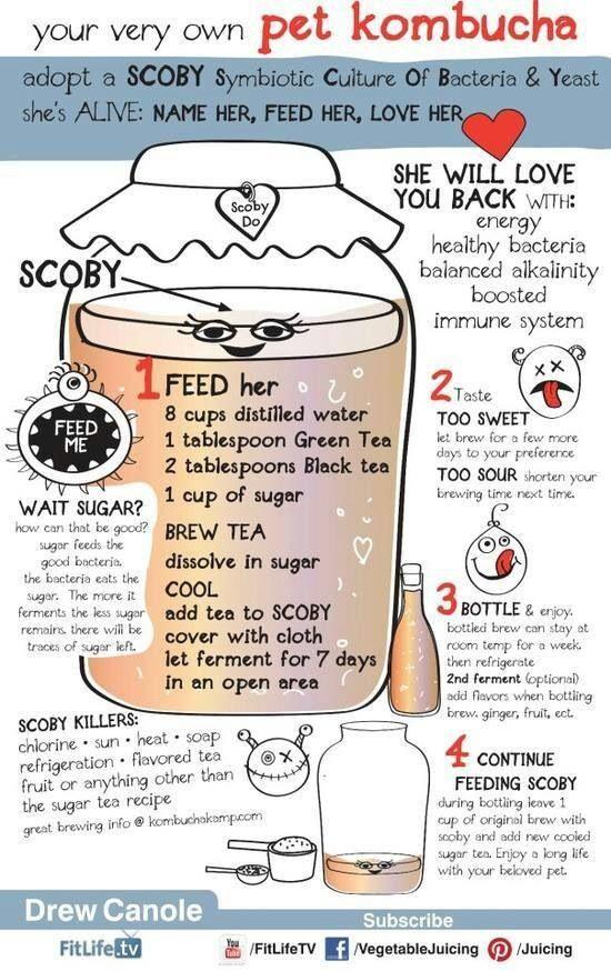 Kombucha it is amazing, we love it : Kombucha tea (KT): Recipe – How to – Ideas – Probiotic – SCOBY