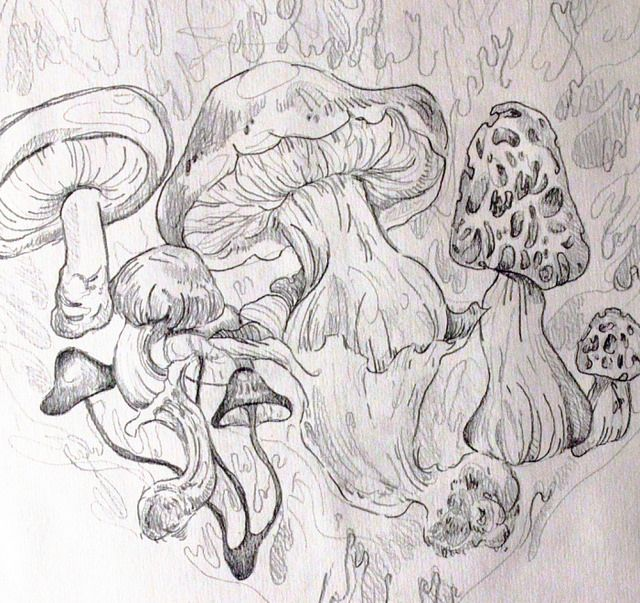 17 best images about mushrooms on pinterest caves for Fairy on a mushroom drawing