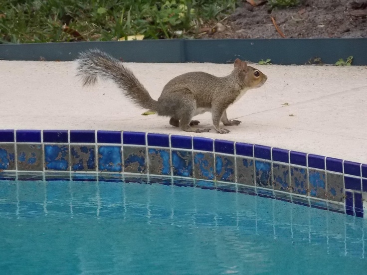 No Poop in the Pool Please!! For Suzanne??? Pinterest