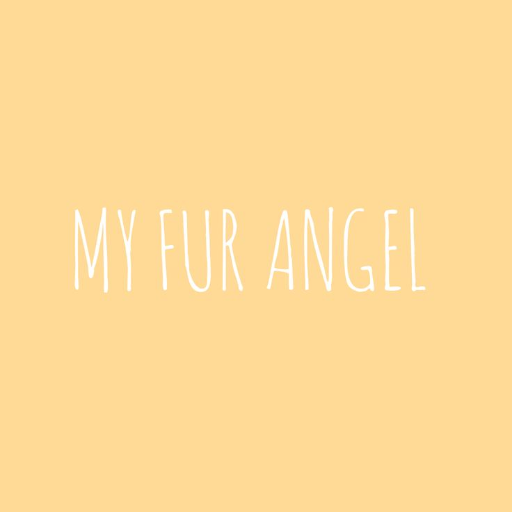 My fur angel