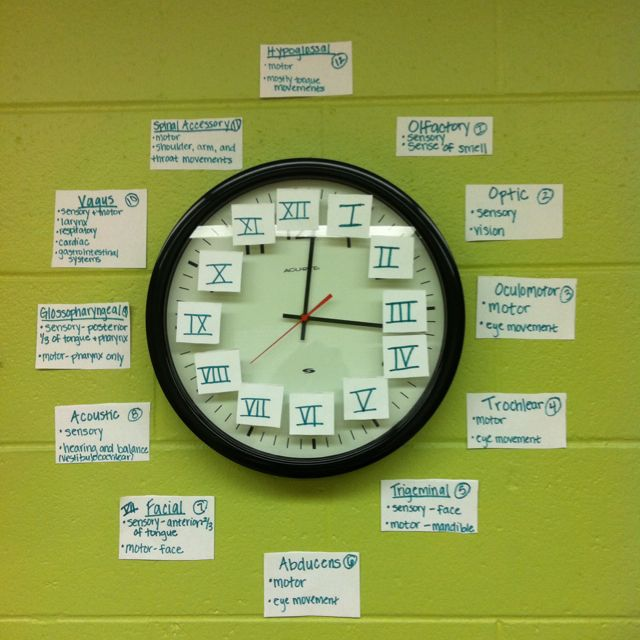 Easy way to learn Cranial nerves - clock with roman numerals- I soooo could have used this in school!! Now I will just share with those still attending and still studying for the Praxis II !!