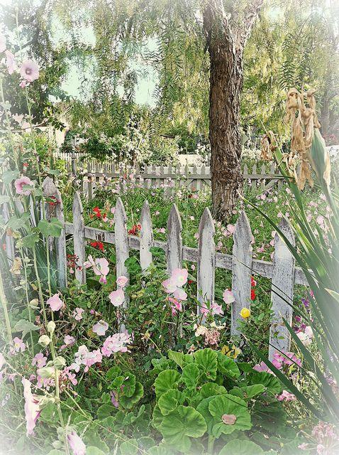 "Beautifully weathered ""white"" picket fence."
