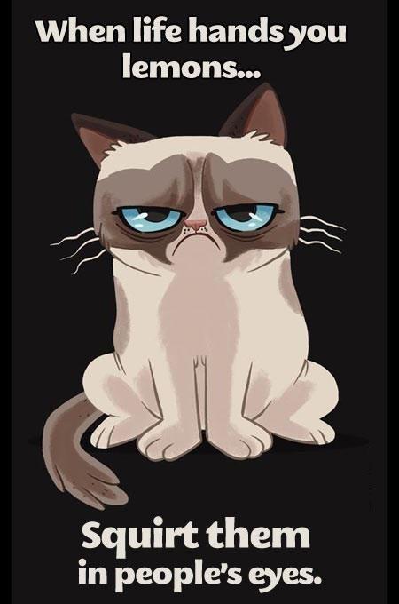 Grumpy cat quotes, grouchy quotes, grumpy cat jokes, grumpy cat humor,