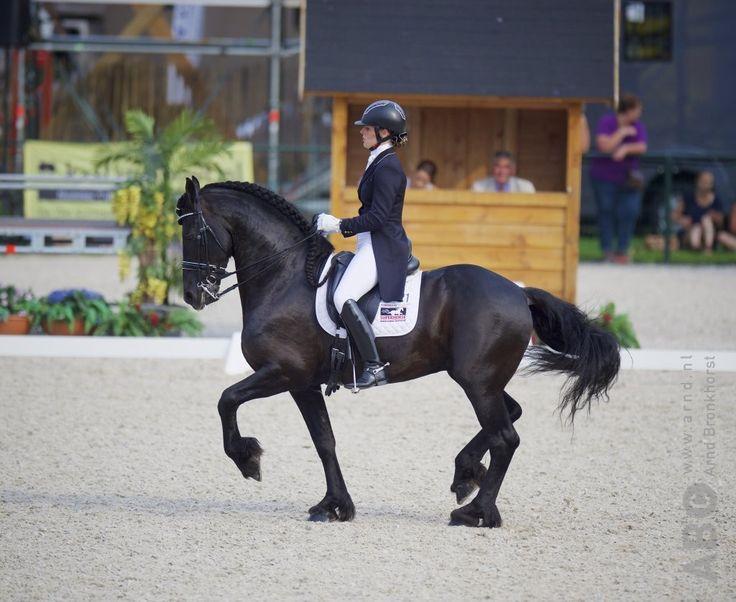 fríz ló frízló díjlovaglás kocsiló menesh.hu barokk lovak lovas magazin