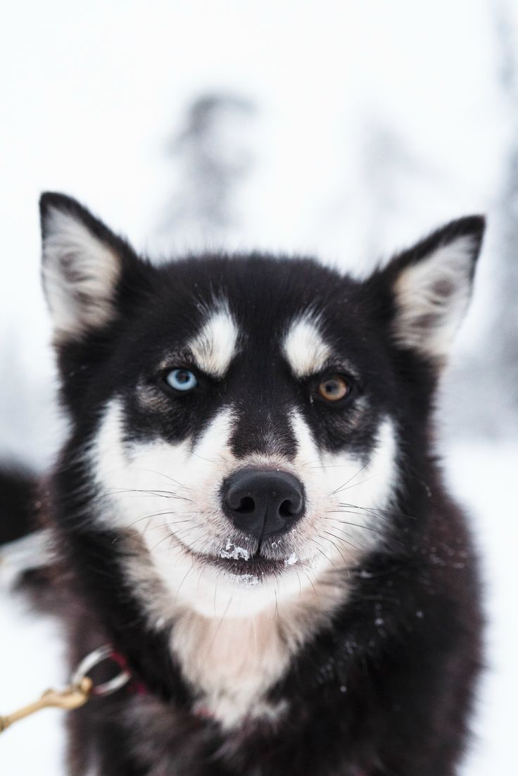 best perris images on pinterest doggies fluffy pets and puppys
