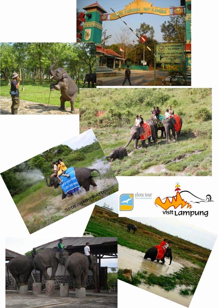 Wisata Gajah, Taman Nasional Way Kambas