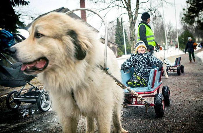 Talvikki-tapahtuma Metsästysmuseolla.| Aamuposti Kuva Jetro Stavén