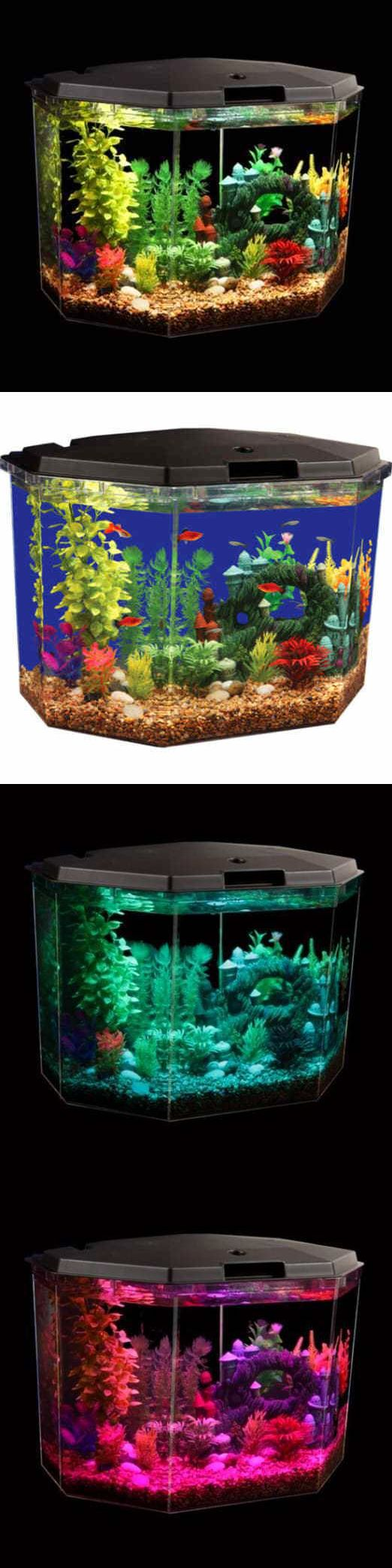 17 best ideas about aqua culture on pinterest 1 gallon for Hexagon fish tank lid