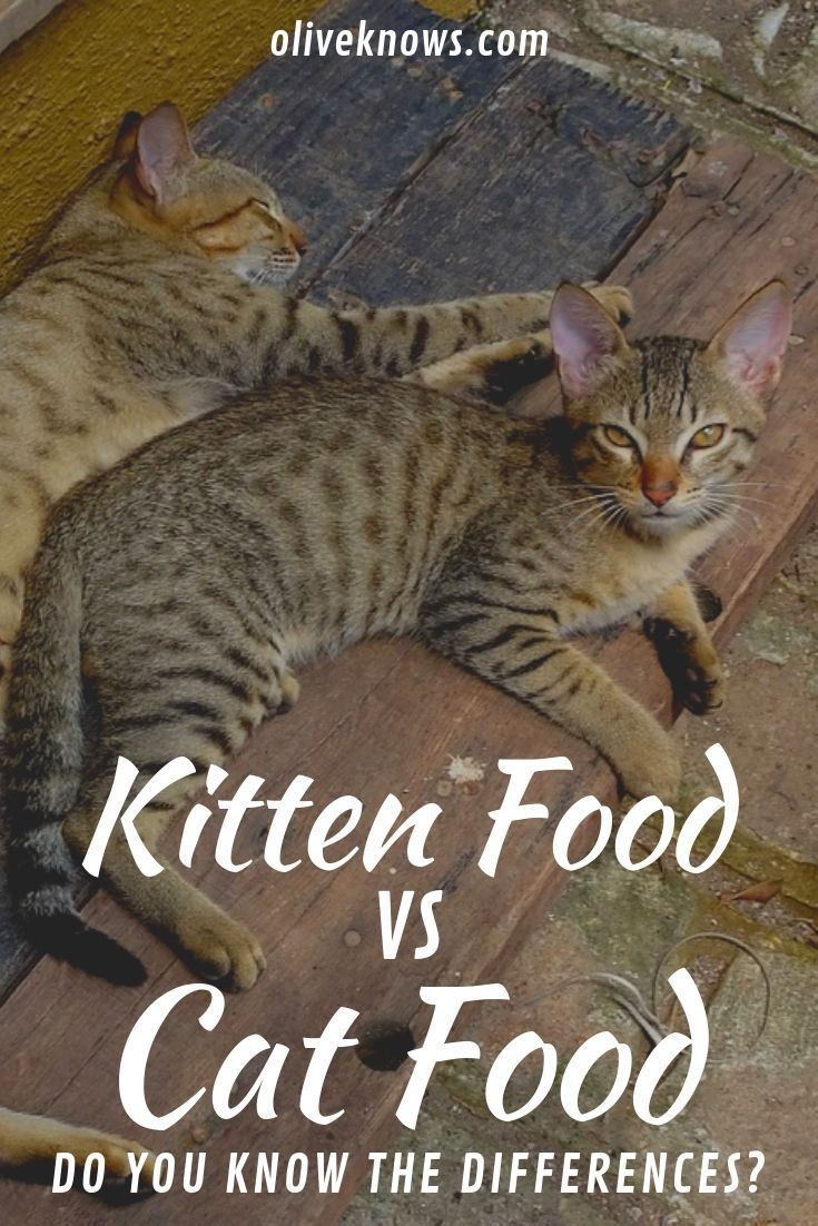 Kitten Food Vs Cat Food Do You Know The Differences Oliveknows Kitten Food Cat Food Cats