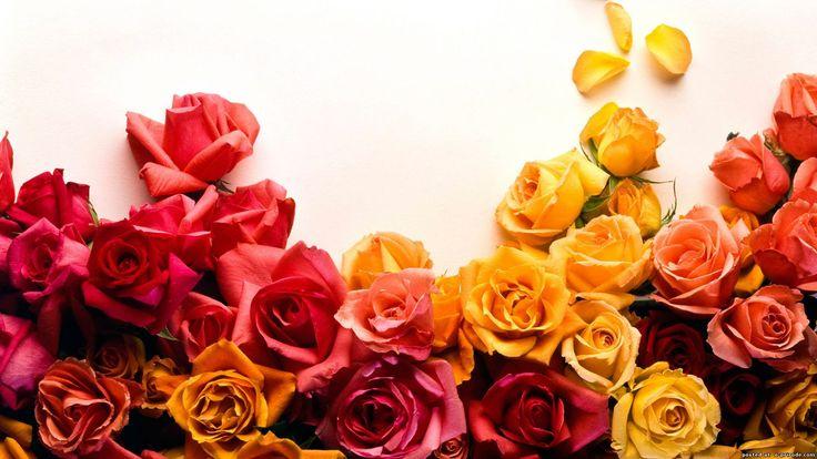 Оранжевые розы фото