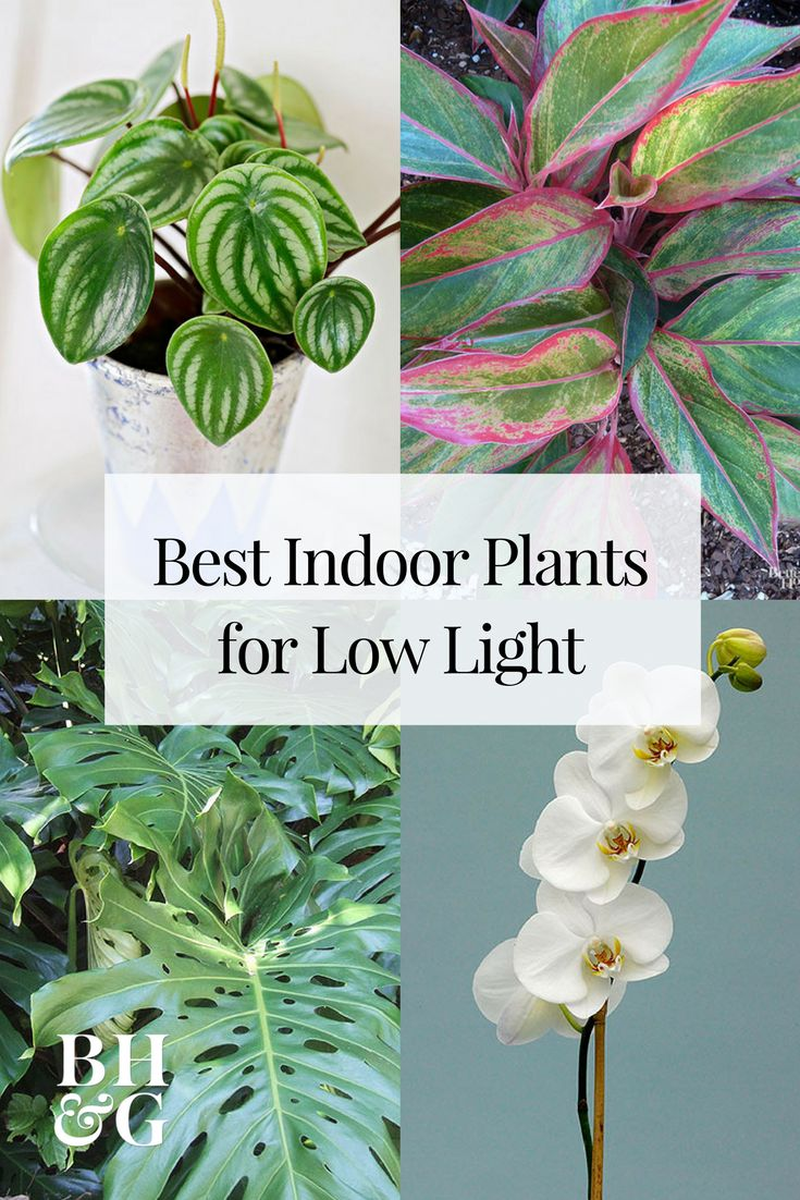 Some of the most colorful and easy-care indoor plants thrive in low-light conditions like the Philodendron, Heartleaf, ZZ Plant, Parlor Palm, Boston Fern, and Dieffenbachia and more. Find the perfect low-light indoor plant for your home. #indoorplants #gardening #plants