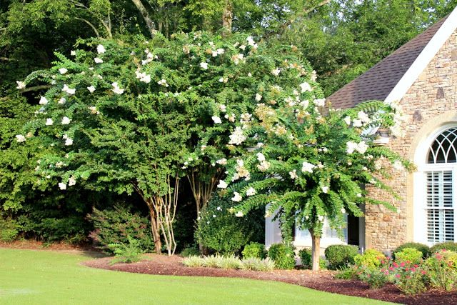 Savvy Southern Style: Home Tour...always crepe myrtles