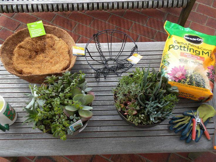 Succulent Orb Experiment :: Hometalk