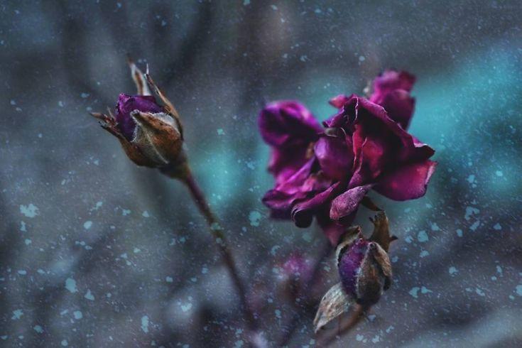 """Mi piace"": 461, commenti: 39 - Andrea Je (@die.andi.fotografiert) su Instagram: ""Happy sunday 💙 . . . . . . #magic_marvels #tv_flowers #pearlsofbokeh #naturehippys_…"""