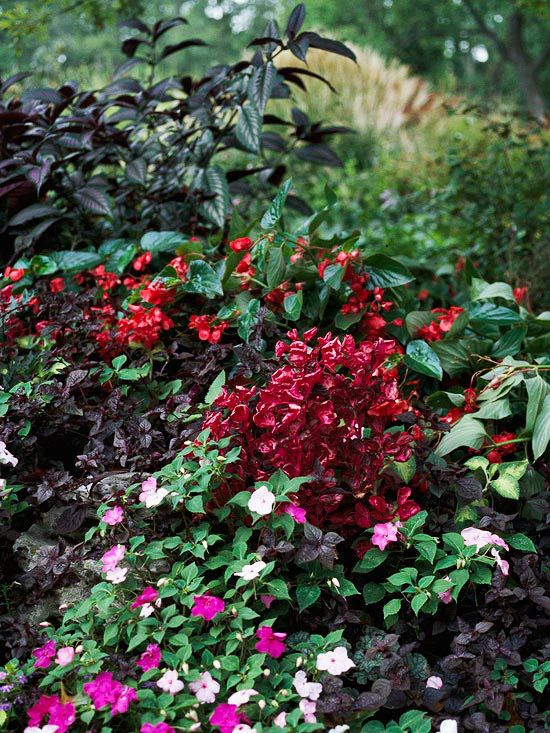 Select annuals to create color in shady spots. Annuals are a perfect addition for shade gardens because they bloom all summer long. Top varieties include impatiens, balsam, torenia, browallia, coleus, and iresine.