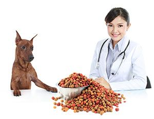 Dehydrated Dog Food: As a dog owner I know that my dog must receive his full quota of essential vitamins, essential minerals and his essential trace elements within his daily dog food mix. Dehydrated dog food provides all these essential ingredients within his daily dog food mix. http://DogSiteWorld.com/ - DogSiteWorldStore...