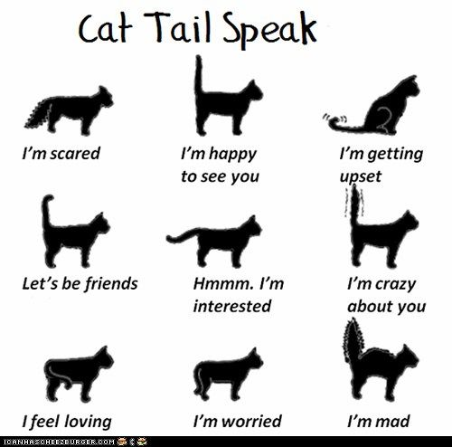 How to tell a cat's emotions by the position of their tail | @Tanya Knyazeva Knyazeva Oneil-Hamilton of Texas #cats #emotions