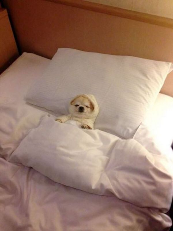 Funny dog in pajamas is lying on the bed | Funny pictures