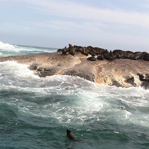 Seal Island, Hout Bay Cape Town.