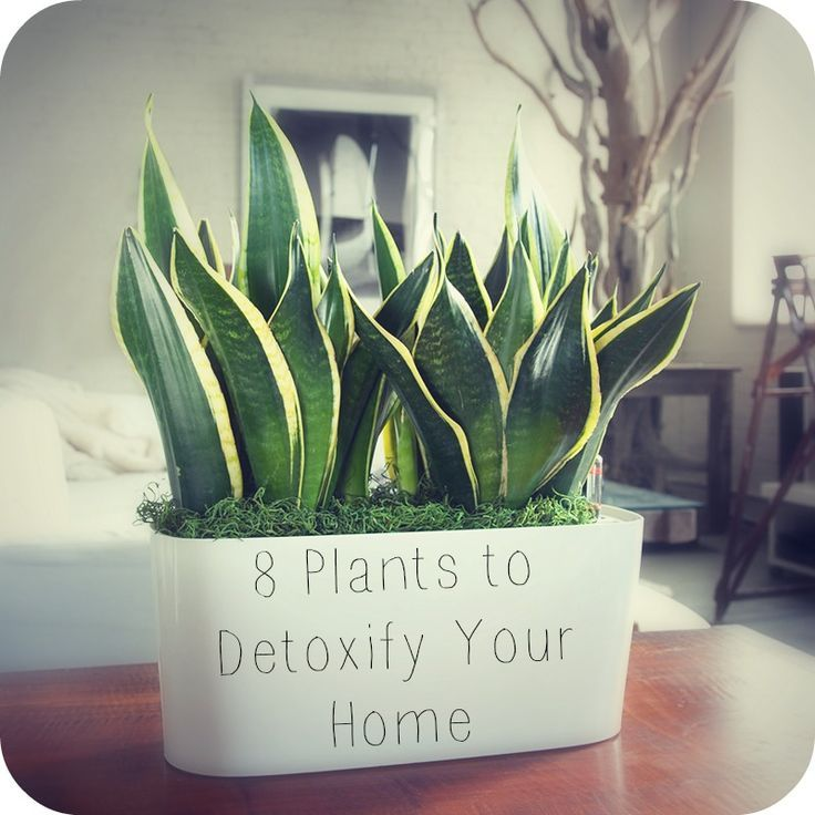 Tired of breathing toxic pollution in your home and office? Here's how to detoxify and freshen the air, au natural, thanks to your friendly houseplants!