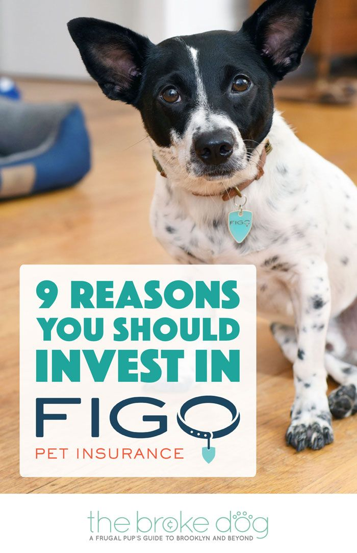 9 Reasons You Should Invest In Figo Pet Insurance Cheap Pet