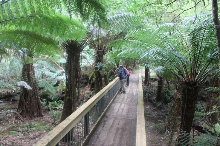 Melba Gully - Rainforest Walk