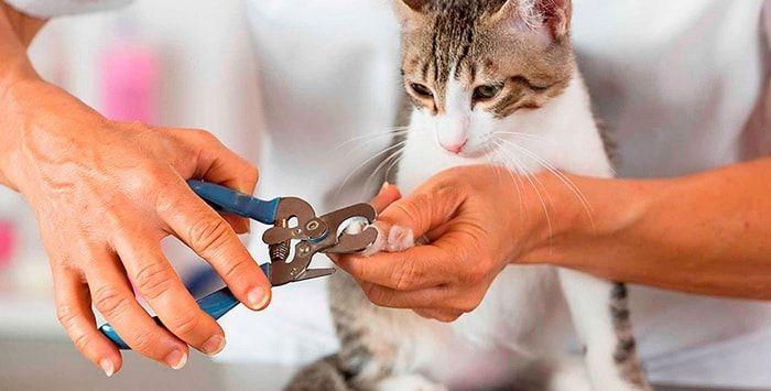 Как правильно подстричь когти кошке и нужно ли это делать » Женский Мир
