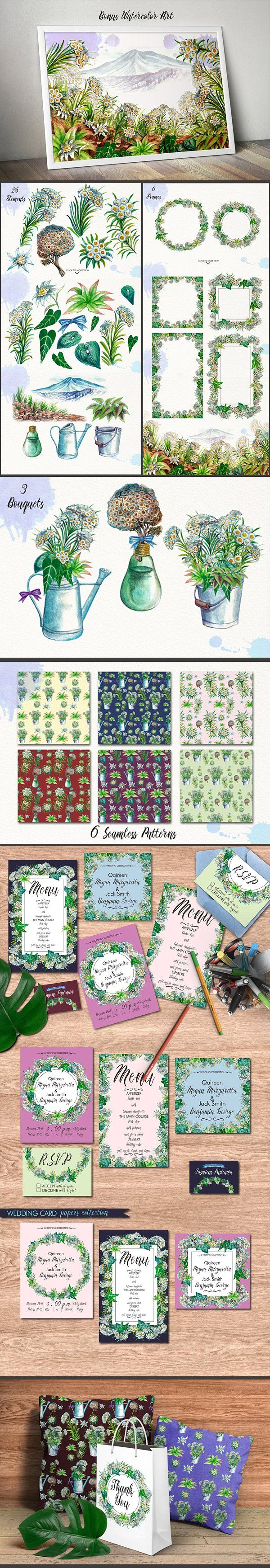 Watercolor Edelweiss by iGRAPHOBIA on @creativemarket