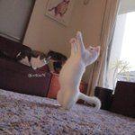 瀬戸にゃん ちさ@無重力猫、ミルコのお家 (@ccchisa76)さんはTwitterを利用しています
