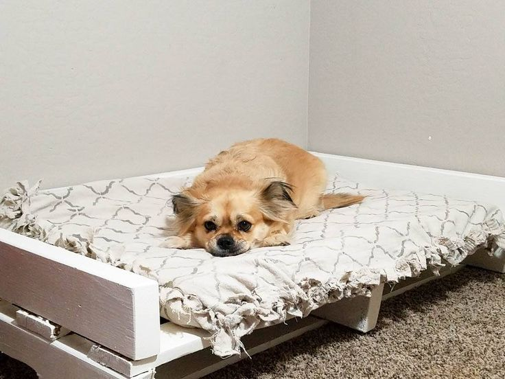 25 best ideas about homemade dog bed on pinterest for Homemade pet beds