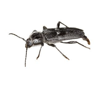 Ongediertegids > Houtaantastende insecten | Rentokil Nederland
