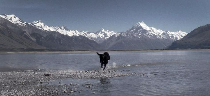 'Ollie' loving life at Glentanner. Please note pets can be allowed upon request, however no pets are allowed in Mt Cook National Park. http://www.glentanner.co.nz