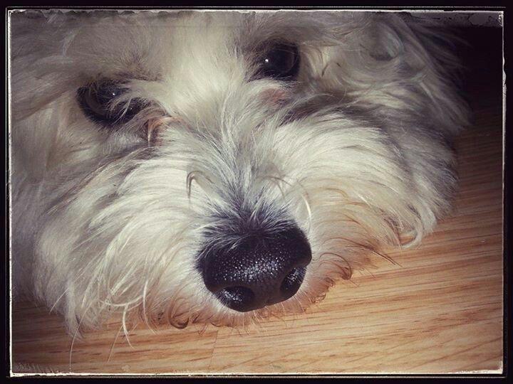 my#dog