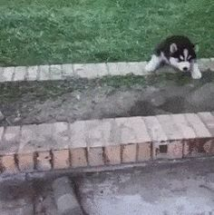 21 Best GIFs Of All Time Of The Week #171
