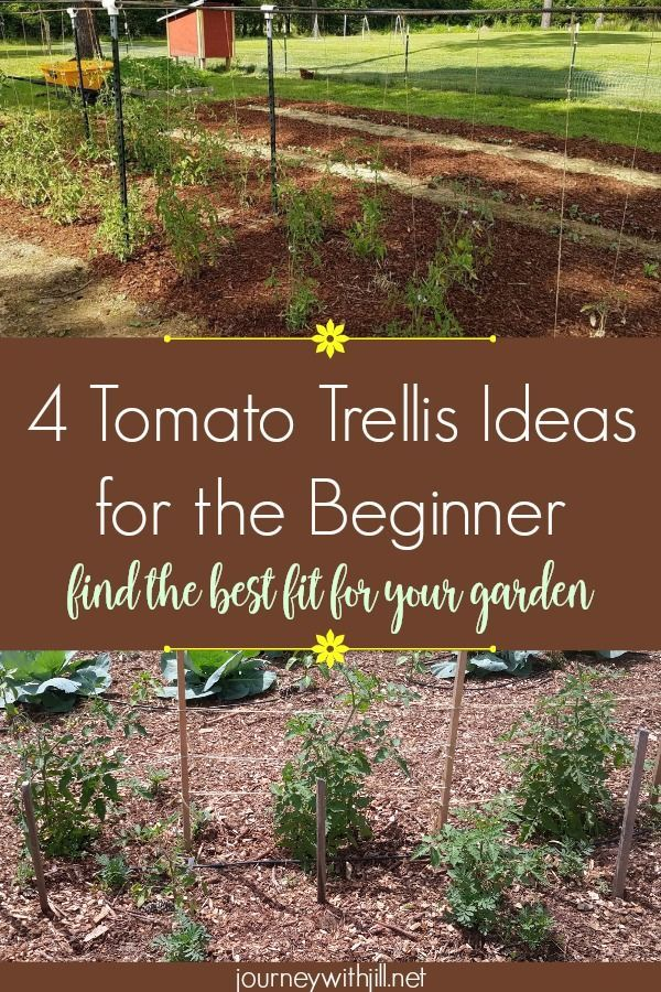 Tomato Trellising Deciding Which Method Is Right For You Garden