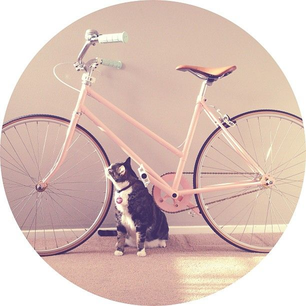 Pastel retro bikes
