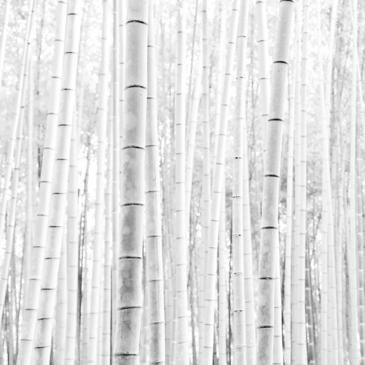 Bamboo 2016 by Kim Youdan   High contrast monochrome imagery   Travel Japan   foundation for mixed Media Photography Art - see more at www.kimyoudan.com