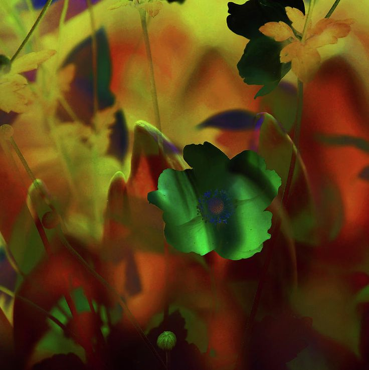 Moon Night In Garden by Jenny Rainbow