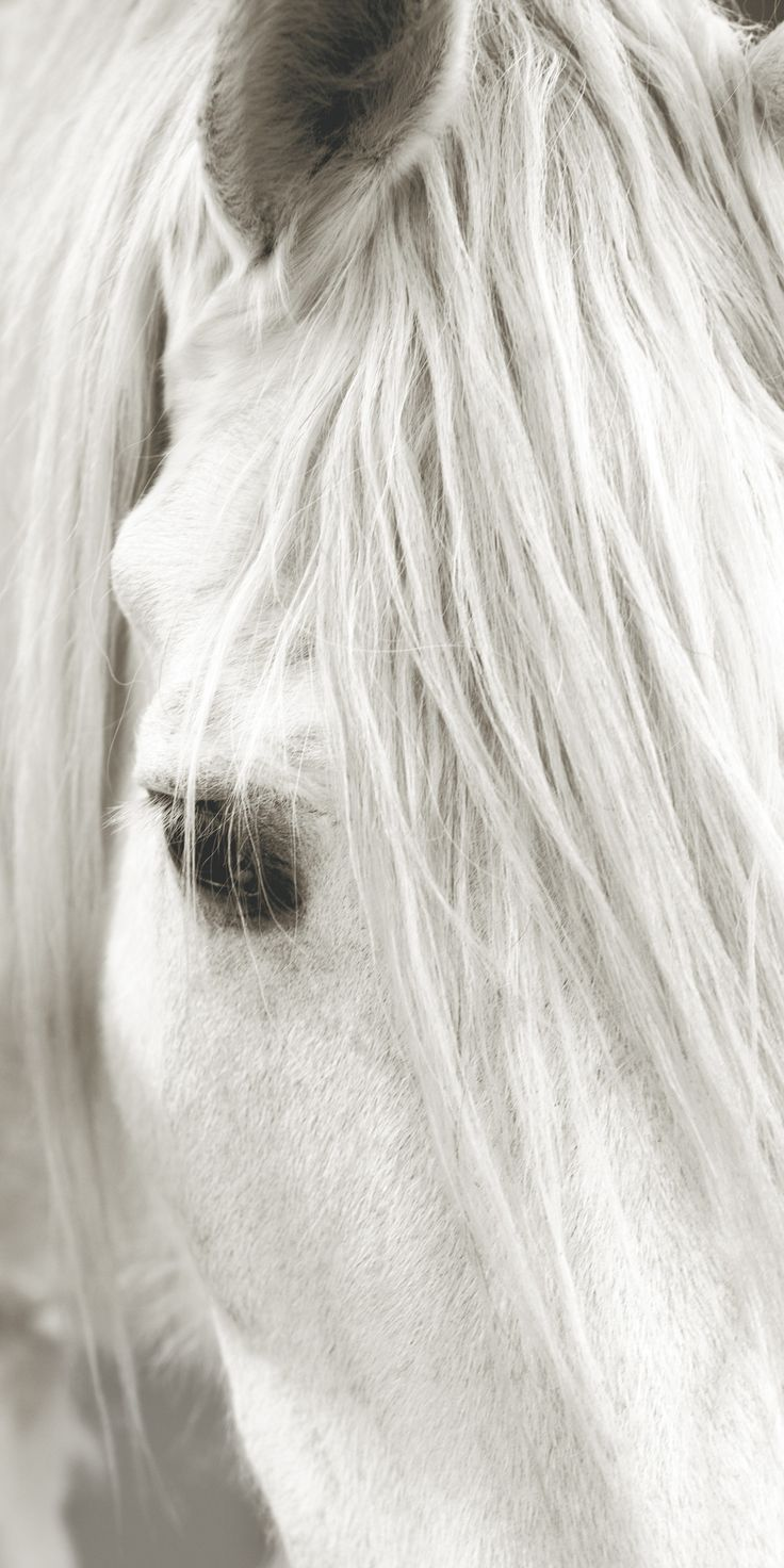 Focusing on White Horse III