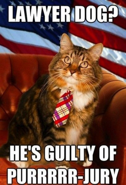 lawyer dog is guilty of purrrr jury jlml lawyer humor