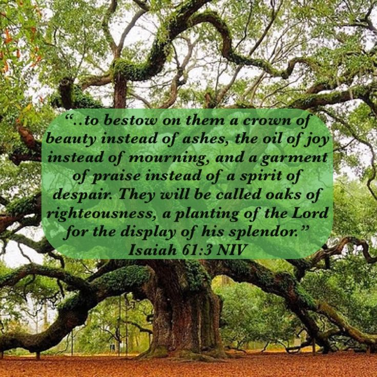 """""""....to bestow on them a crown of beauty instead of ashes, the oil of joy instead of mourning, and a garment of praise instead of a spirit of despair. They will be called oaks of righteousness, a planting of the Lord for the display of his splendor."""" Isaiah 61:3 NIV #Beautyinsteadofashes #garmentofpraise #oaksofrighteousness #Restoration #Renew #Verseoftheday #Bibleverse"""