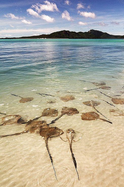 Whitehaven Beach, Queensland.